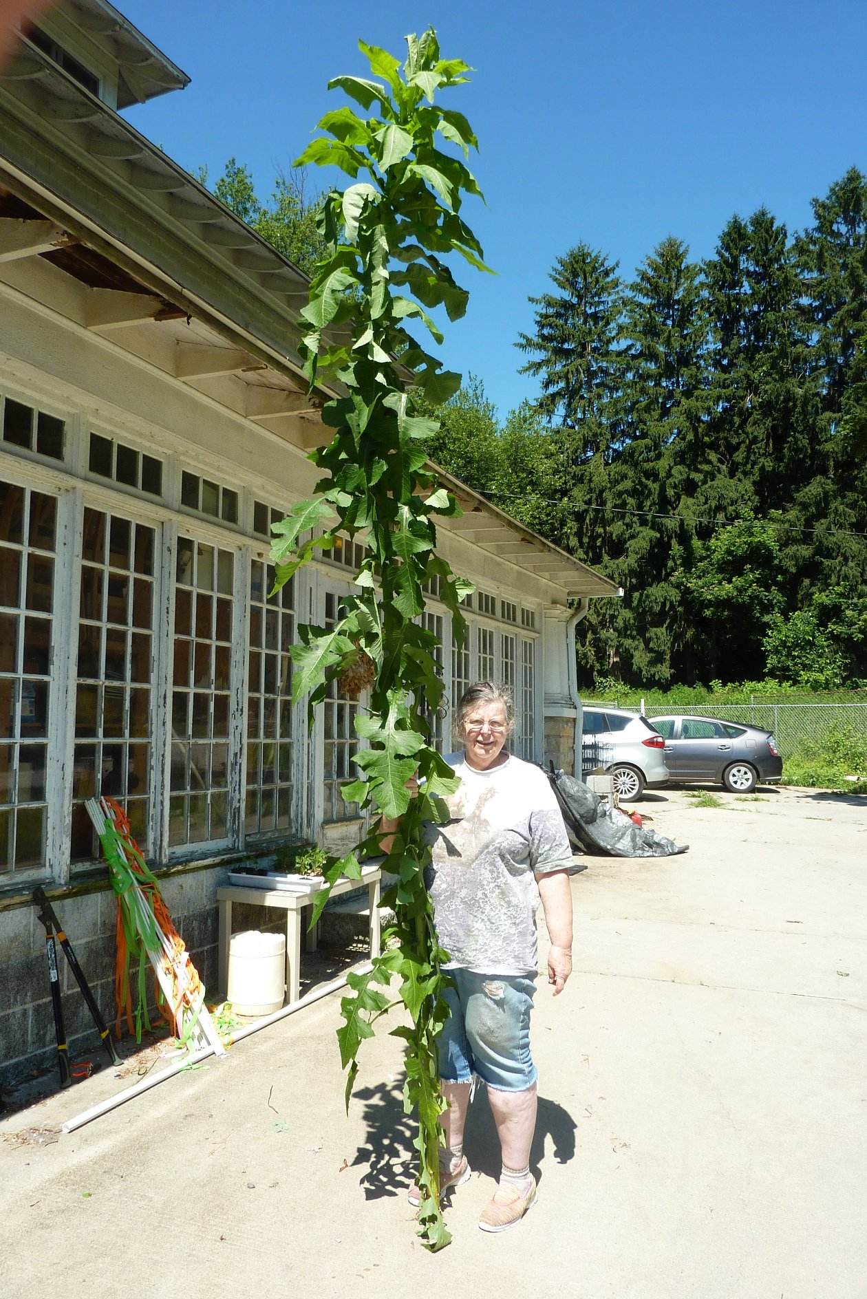 Bonnie with 10 foot high weed